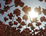 Ceramic poppies commemorate British soldiers killed during WWI